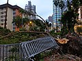 Yee Wo Street in Hong Kong - Fallen Trees due to Typhoon Mangkhut 2018 near St Paul School.jpg
