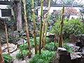 Yu Garden, Shanghai (December 2015) - 10.JPG