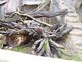 Zoo am Meer 2008 PD 79.JPG