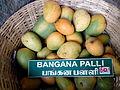 """""""Aesthetic Banganapalli Mango"""".jpg"""