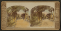 (A view of) date palms, Queens Hospital, Honolulu, from Robert N. Dennis collection of stereoscopic views.png