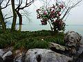 ·˙·ChinaUli2010·.· Hangzhou - panoramio (15).jpg
