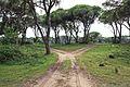 Δάσος Στροφυλιάς 10.jpg