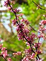 Ботанічний сад ім. І.Фоміна IMG 8292.jpg