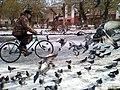 Велосипедист вдохновленно наблюдает за птицей мира.jpg