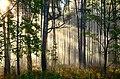 Волшебство рассветного леса.jpg
