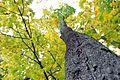 Восеньская замалёўка - panoramio (1).jpg