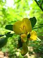 Гази Баба - Растителен свет (96).JPG