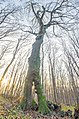 Деревна-дивина-в-Ліс-під-Трудовачем.jpg