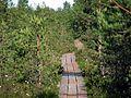 Дорожка к болоту - panoramio.jpg