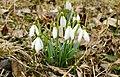 Колонія чудових квітів у лісі.jpg