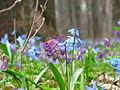 Краски весны.JPG