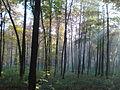 Ліс восени.JPG