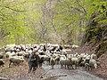 Околина на селото Тајмиште, Република Македонија 05.jpg
