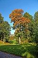 Ораниенбаум.Осень в Верхнем парке.jpg