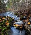 """Осенний ручей в заповеднике """"Кивач"""".jpg"""