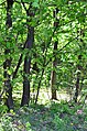 Парк Аскольдова могила у Києві. Фото 6.jpg