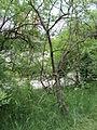 Парк шума Гази Баба во мај (187).JPG