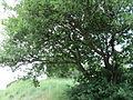 Парк шума Гази Баба во мај (78).JPG