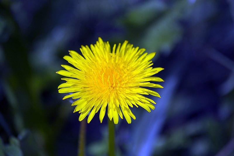 File:گلها و گیاهان دارویی، روستای خفر پادنا در ایران 45.jpg