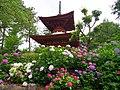 久米寺多宝塔とあじさい園 Hydrangea garden in Kume-dera 2013.6.24 - panoramio.jpg