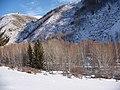冬季小东沟桦林和西伯利亚松树 余华峰 - panoramio.jpg