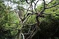 呀诺达热带雨林风光 - panoramio (5).jpg