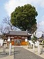 国府八幡神社 藤井寺市国府1丁目 2013.1.30 - panoramio.jpg