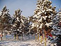 广场美丽的冬景 余华峰 - panoramio.jpg