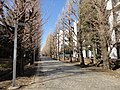 東京大学駒場キャンパス - panoramio (3).jpg
