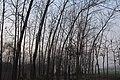 树林 - panoramio (4).jpg