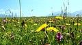热尔大坝草原Rerdaba grassland - panoramio (5).jpg