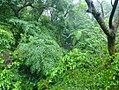 第二水管橋隱沒在溪流樹木中.jpg