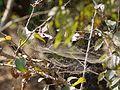 ... web -- tent spider web (4305043541).jpg