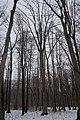 05-101-5005 Дендрарій лісово-дослідної станції Вінниця (2).jpg