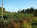 0574jfLandscapes Mabalas Diliman Salapungan Paddy fields San Rafael Bulacan Roadsfvf 20.JPG