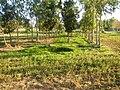 0581jfLandscapes Mabalas Diliman Salapungan Paddy fields San Rafael Bulacan Roadsfvf 18.JPG
