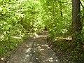 14.05.2006 - територія заказника Чернечий ліс (1).jpg