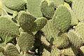 15-07-13-Teotihuacán-RalfR-N3S 9198.jpg