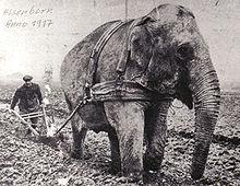 Eléphant et religion  dans ELEPHANT 220px-1917_Elephant_vor_dem_Pflug
