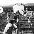 1948 - עבודות בניה - קבוצת צעירים-PHL-1089210.png
