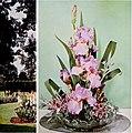 1965 Cooley's Gardens (1965) (16051211143).jpg