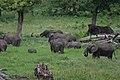 20090506-TZ-NGO Safari 271 (4674653859).jpg