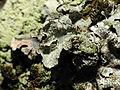 2014-01-06 13-05-36 lichen-12f.jpg