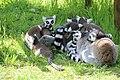 2015-05-24 Vogelpark Marlow 29.jpg