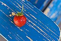 2016-366-261 Picking Strawberries (well Strawberry, only 1) Into September (29657615422).jpg