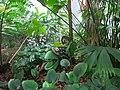 2018-06-18-bonn-meckenheimer-allee-169-botanischer-garten-regenwaldhaus-10.jpg