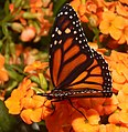 2019-04-15 13-04-09 jardin-papillons-hunawihr.jpg