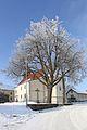2 Sommerlinden bei der Pfarrkirche von Buchbach 2016-01 NÖ-Naturdenkmal WT-043.jpg