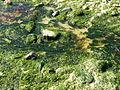 4664.Das Felsenmeer rings um das Pointe du Château - Côte de Granit Rose - commune Plougrescant ,Departement Côtes-d'Armor , Region Bretagne - Spaziergang - Steffen Heilfort.JPG